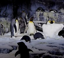 Penguins everywhere by Perggals© - Stacey Turner