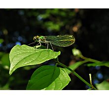 Green wings Photographic Print