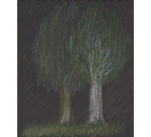 Happy Trees Photographic Print