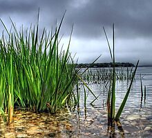 Sea Grass... by laurie13