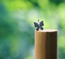 Static Butterfly by vichy