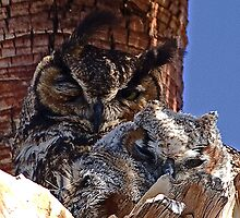 Great Horned Owls (mother and baby) by Marvin Collins