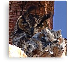Great Horned Owls (mother and baby) Canvas Print