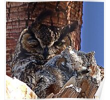 Great Horned Owls (mother and baby) Poster