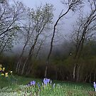 In the Misty Evening © by jansnow