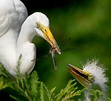 And Mr. Dragonfly Just Popped In For Lunch by Joe Jennelle