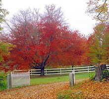 Autumn in New England by Alberto  DeJesus