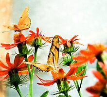 Butterfly Garden by Sherie LaPrade