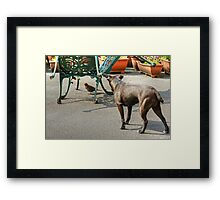 There Could Be Trouble Ahead... Framed Print