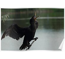 Double-crested Cormorant #2  Poster