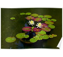 Pond Lilies By Jonathan Green Poster