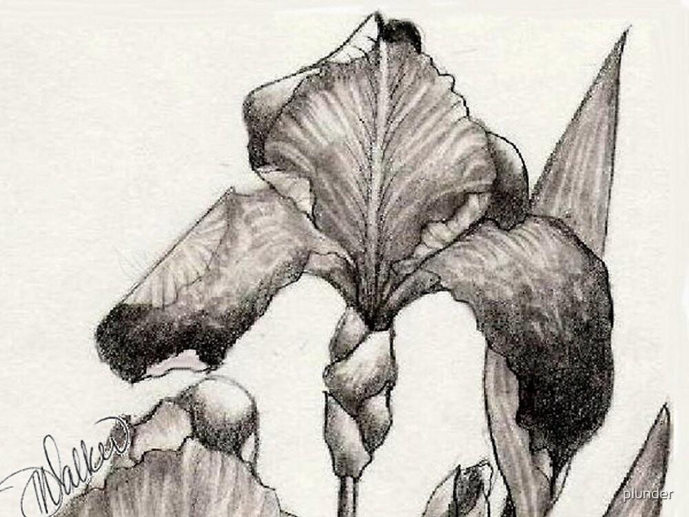 Iris Illustration-2 close up by plunder