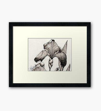 Iris Illustration-2 close up Framed Print