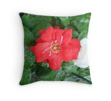 Red rose and raindrops Throw Pillow