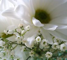 Baby's Breath and More......^ by ctheworld