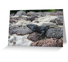 black and blue lizard in tenerife Greeting Card
