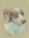 """Callow"", red merle Australian Shepherd by Pam Humbargar"