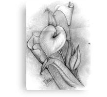 Calla Lillies -1 Canvas Print