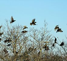 Last Dance At Roosting Time by Jean Gregory  Evans