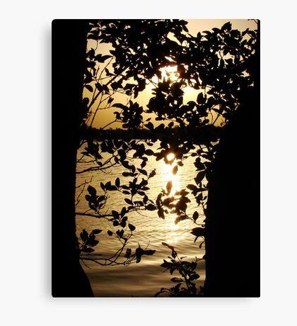 Mangrove Sun Canvas Print