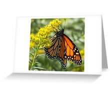 Monarch on flowers Greeting Card