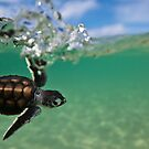 Surfing turtle by David Wachenfeld