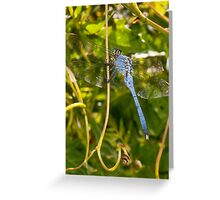 Tarzan the...err...Dragonfly?! Greeting Card