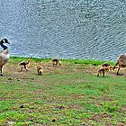 Momma goose with her babies by SPPhotography