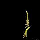 Plant patterns on black,,,,, by DaveHrusecky