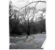 Glencree River Black & White Poster