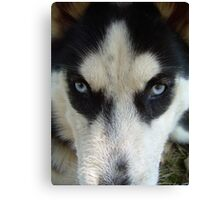 MasQue eyes..our new baby girl Canvas Print