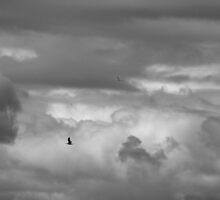 Gliding in the Gray by fototaker