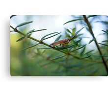Some type of cockroach Canvas Print