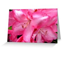 Touched by the morning rain. Greeting Card