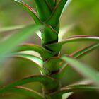 Tropical close up by MarthaBurns