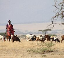 Maasai (or Masai) Herders with Cattle, Tanzania  by Carole-Anne