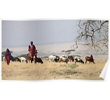 Maasai (or Masai) Herders with Cattle, Tanzania  Poster