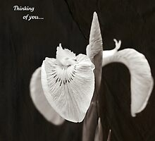Thinking of you... by Astrid Ewing Photography