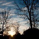 Sunset Silhouette by Carol Ferbrache
