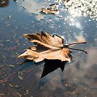 Leaf No Ripples by sonoflite