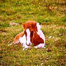 Spring foal by LadyFi