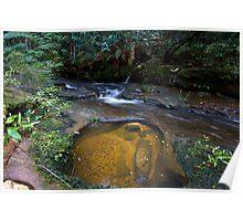 Suburban rainforest Poster