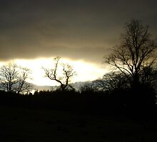 Eye of Trees (sunset, Falkland) by armadillozenith