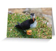 Puffin, Saltee Island, County Wexford, Ireland Greeting Card