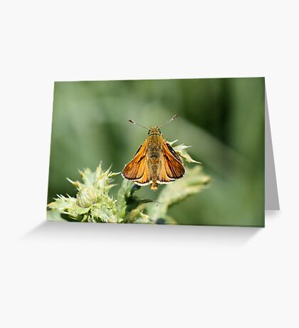 Copper Coloured Greeting Card