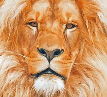 Old Lion by artstoreroom