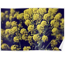 Vintage Wildflowers - Hazy summers day Poster
