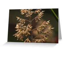 Summer Details Greeting Card