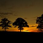 Woodham trees at sunset by barry jones