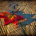 leaf at sunset by barry jones